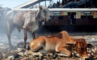 """""""We love Animals more than Humans"""" India"""